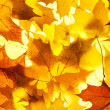 Maple leaves — Stock Photo #6734552