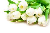 Witte tulpen — Stockfoto