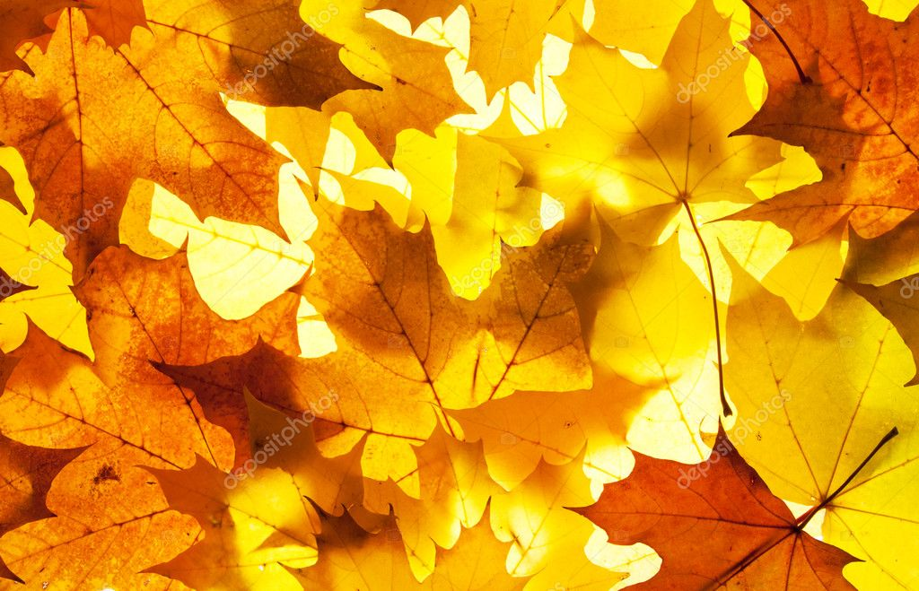 Maple leaves - background — Stock Photo #6734552