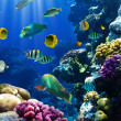 Coral colony and coral fish — Stockfoto
