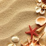 Sea shell on sand — Stock Photo #5915878