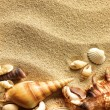 Sea shell on sand — Stock Photo #5916072