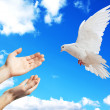 Hands released into the sky to the white dove — Stock Photo #5917016