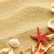 Sea shell on sand — Stock Photo #5917095