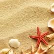 Sea shell on sand — Stock Photo #5917095