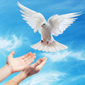 Hands released into the sky to the white dove — Stockfoto
