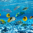 Coral colony and coral fish — Stock Photo #5921281