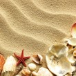 Sea shell on sand — Stock Photo #5921693