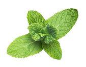 Menta verde aislado en blanco — Foto de Stock