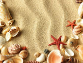 Sea shell on sand — Stock Photo