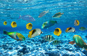 Coral colony and coral fish — Stock Photo