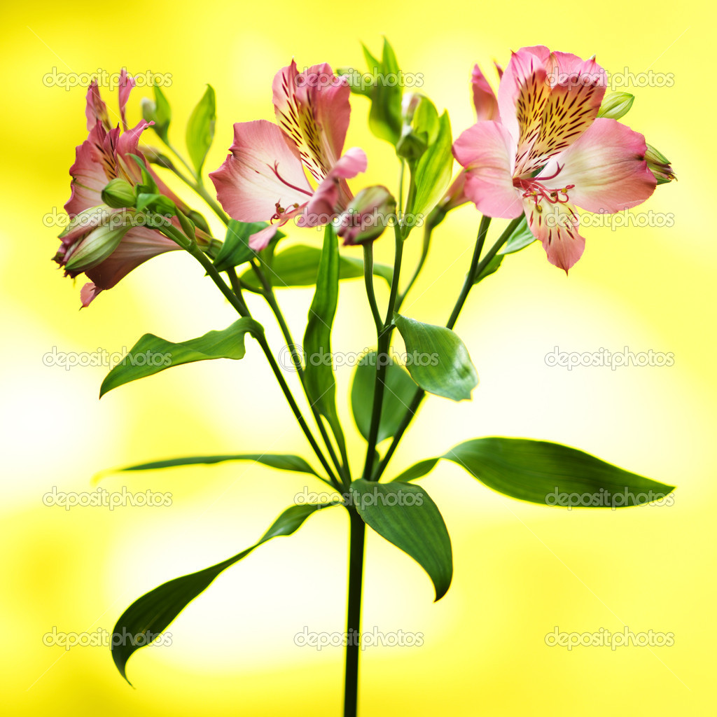 Bouquet of spring flowers on a yellow background — Stock Photo #5920703