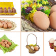 Collage Easter eggs on a white background — Stock Photo
