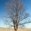 Old bare tree on bright blue sky background - Stock Photo