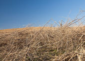 Haystack on the meadow in sunny day — Stock Photo