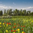 Stock Photo: Red poppies and yellow flowers against background of forests a