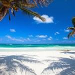 Coconut palms at beach — Stock Photo