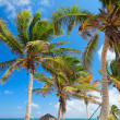 Beautiful Caribbean beach — Stock Photo #6051535