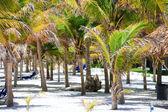 Palmbomen — Stockfoto