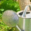 Watering pot in the garden - Stock Photo