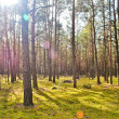 Morning sun beams in the autumn forest - Stock Photo