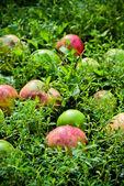 äpplen i gräset — Stockfoto