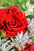 Dva snubní prsteny v červené růže — Stock fotografie