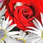 un anillo de compromiso en una rosa roja. concepto de propuesta — Foto de Stock