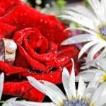un anello di fidanzamento in una rosa rossa. concetto di proposta — Foto Stock