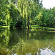 Small pond in a park — Stock Photo