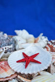 Seashells and a sea star isolated on blue — Stock Photo