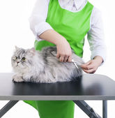 Grooming cat — Stock Photo