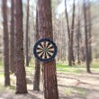 Darts boards on the tree in forest — Stock Photo
