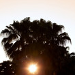 Palm tree silhouette at sunset — Stock Photo #5591909
