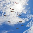 Nine pelicanos flying in blue cloudy sky — Stockfoto