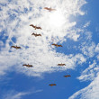 Nine pelicanos flying in blue cloudy sky — Stok fotoğraf