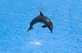 Dolphin in a jump — Stock Photo
