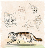 Vintage set of outline cats — Stock Vector