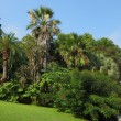 The green lawn in an exotic park — Stock fotografie