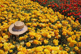Fashionable hat left on flowers — Stockfoto