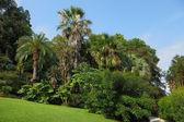 El verde césped en un parque exótico — Foto de Stock