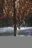 Picturesque tree in a spray — Stock Photo