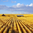 Stock Photo: Solar midday on fields of Montana