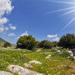 The hills of the Mediterranean — Stockfoto