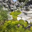 Stream with green ooze — Stock Photo