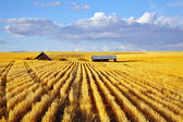 Solar midday on fields of Montana — Stock Photo