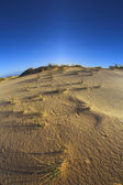 The dunes on a sunset — Stock Photo