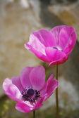 Urocze kwiaty dobrze — Zdjęcie stockowe