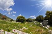 The hills of the Mediterranean — Stockfoto