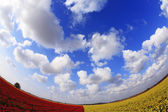 The red - yellow flower field — Stock Photo